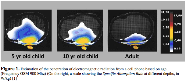 penetration of cell phone radiation