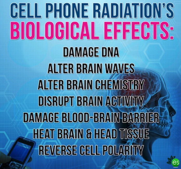 cell phone effects