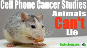 cell phone cancer animal studies