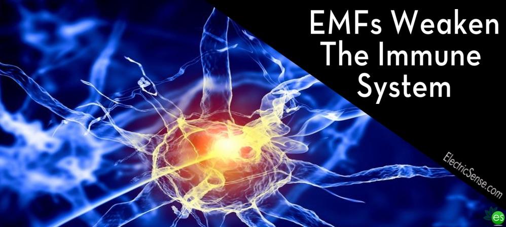 EMF Weaken immune system