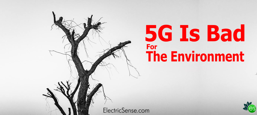 dead nature because of 5G