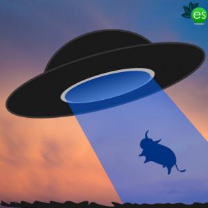 cow under hat